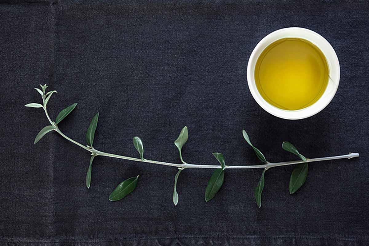 Dieta Perricone (5)